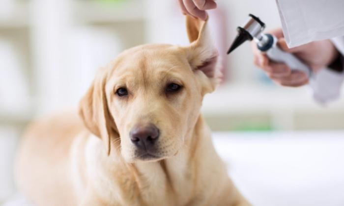 Best Pet Clinic in Gurugram